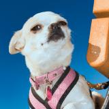 3-Week Doggie Bootcamp