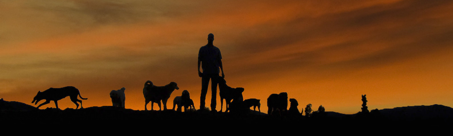 Dominant Dogs Footer Image